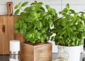 cultiver-plantes-interieur